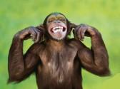 scimmianonascolta