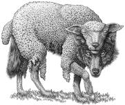 lupo-vestito-pecora